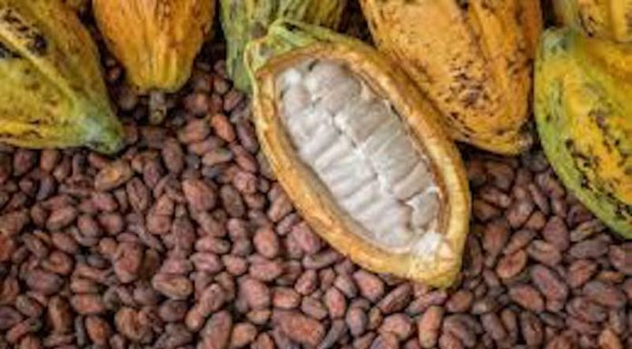 Nigeria Will Team Up With Cameroon To Set Cocoa Price