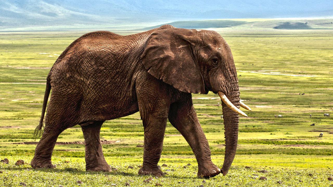 Over 100 Elephants Die In Botswana In Suspected Anthrax