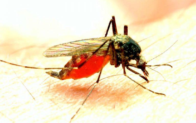 Nigeria Pledges $12M To Global Fund On Malaria, TB, Others