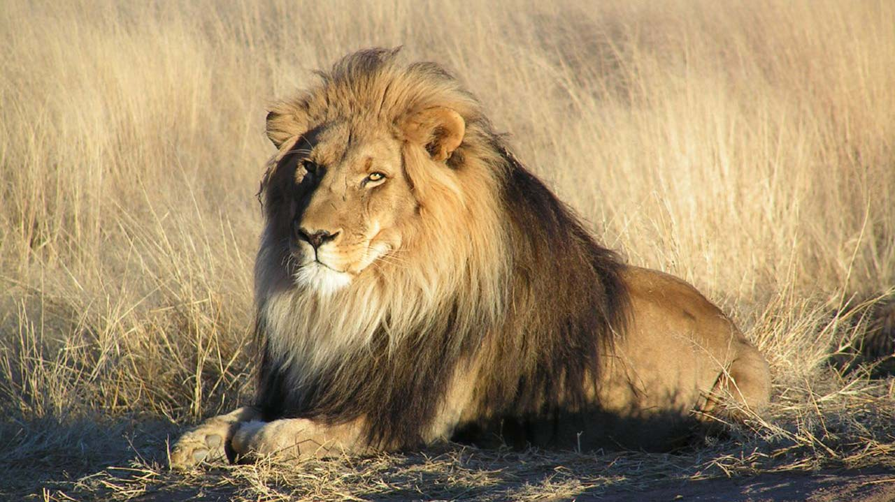 Lion Escapes From Kano Zoological Garden