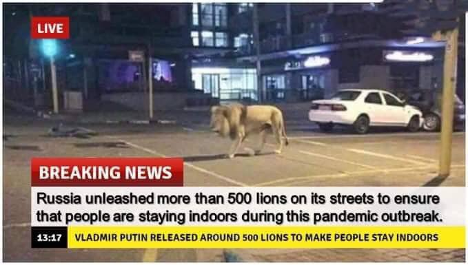 Fact Check - Has Putin Released Lions On Russia Streets