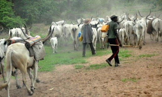 Herdsmen Butcher 65-Year-Old Man In Imo
