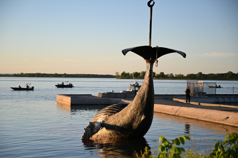 Wayward whale that swam 400km upriver to Montreal found dead
