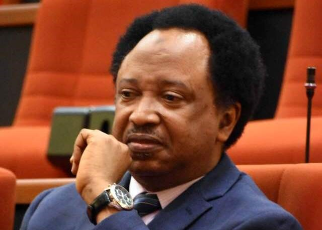 Shehu Sani Cries Out As Kaduna-Abuja Train Kills Over 60 Cows