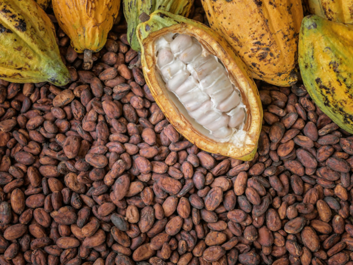 Starting A Cocoa Business In Nigeria And Profiting From It