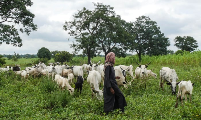 Open all cattle routes – Kaduna peace committee tasks farmers