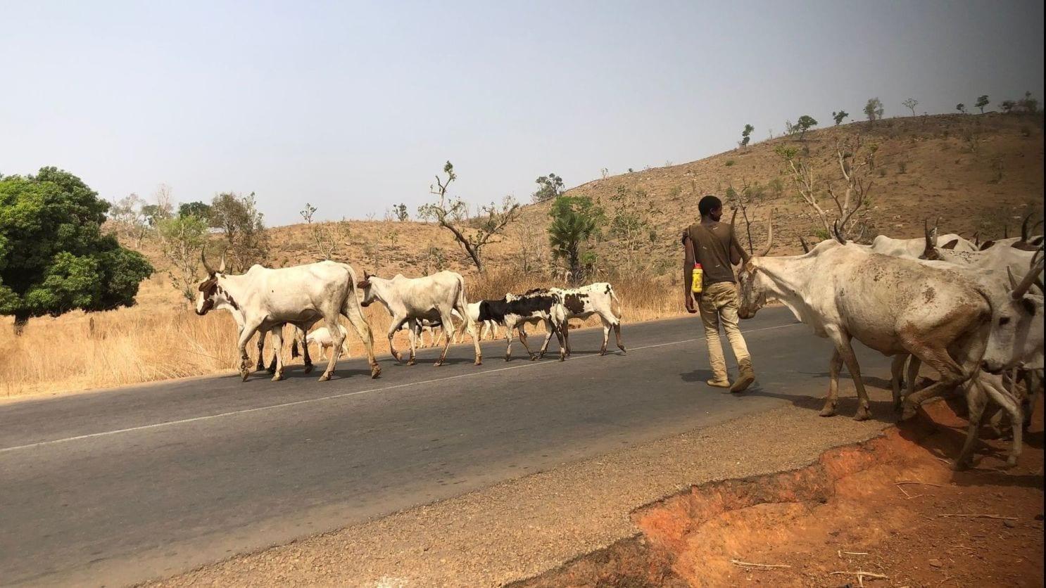 Farmers, Herders Clash Leaves At Least 14 Dead In CAR