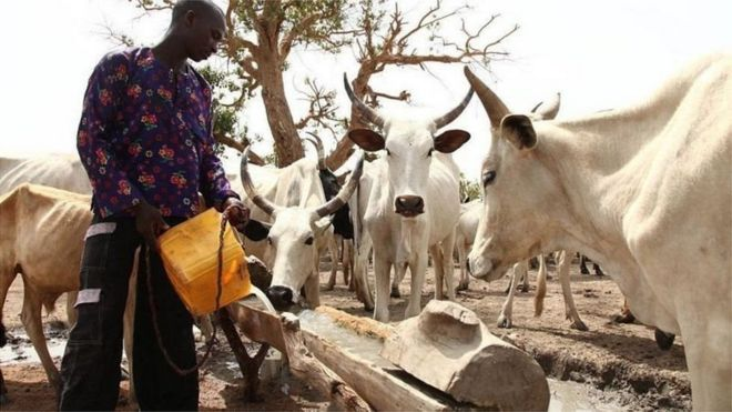 Killer Herders Are Backed By Miyetti Allah - Cattle Dealers